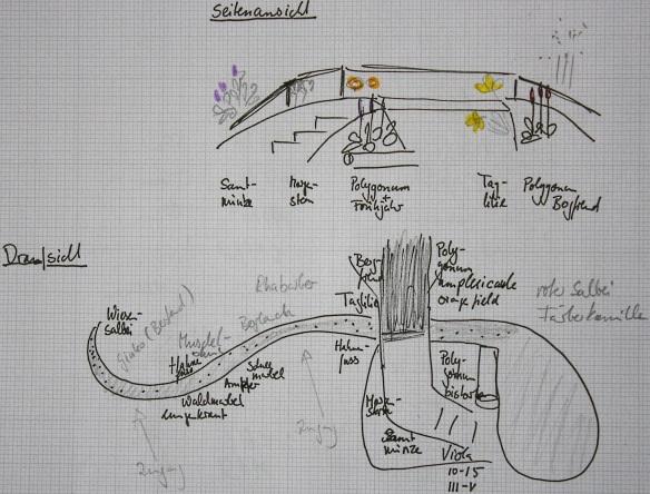 Pflanzplan für trockenen Bachlauf als Seitenansicht und Draufsicht