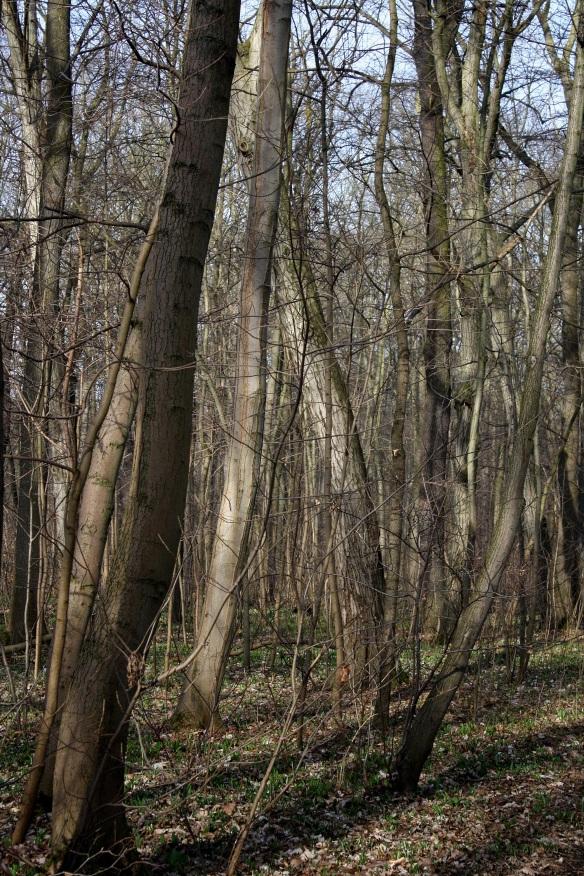Bäume im Vorfrühling