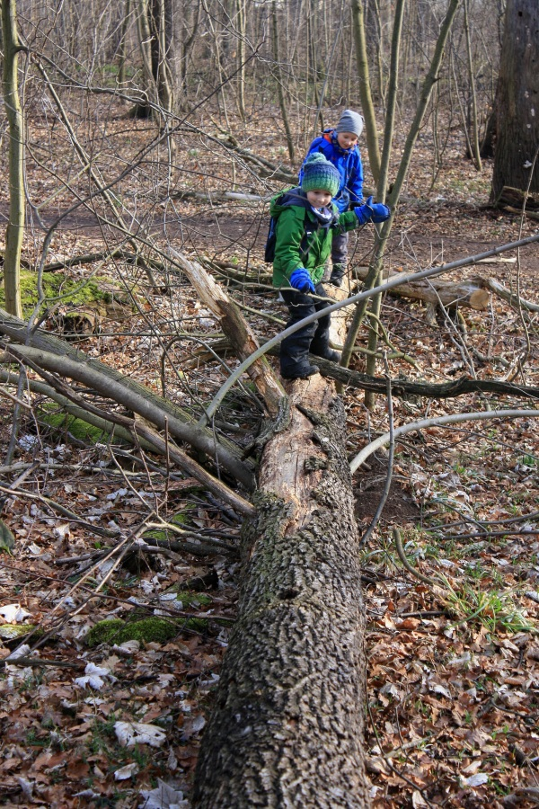 Kinder beim Baumstammbalancieren