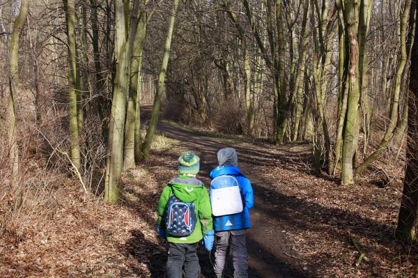 Waldweg im Vorfrühling