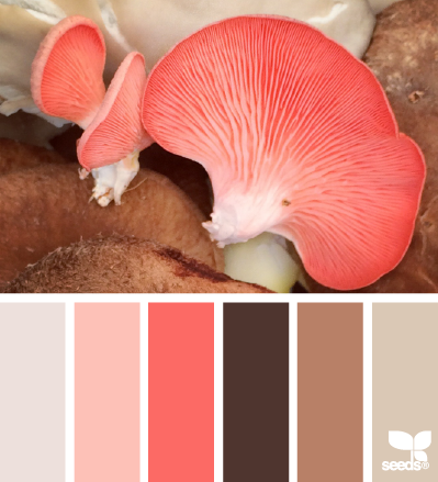 MushroomHues